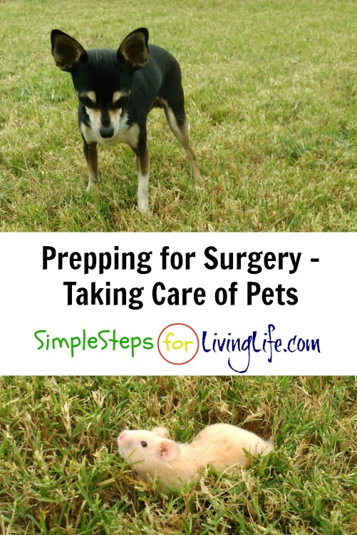 Prepping for Surgery – Taking Care of Pets | SimpleStepsForLivingLife
