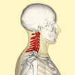 Acupuncture Heals Neck Disc Pain - St Louis Acupuncture