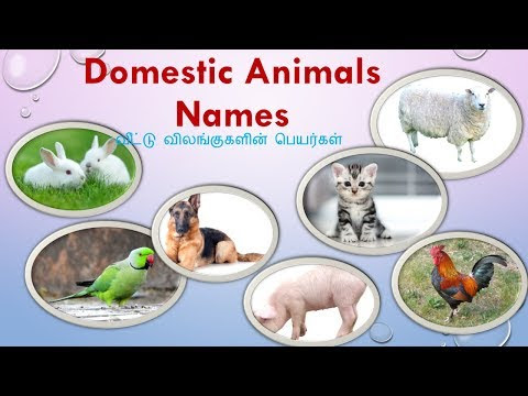 Wild & Domestic animals name in Tamil and English