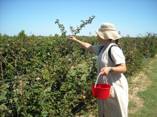 Susan Picking Blackberries