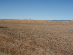Agriculture - and Mt Adams in the distance