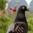 Zombie Pigeons Spotted in Las Vegas Area | Pigeons Be Gone