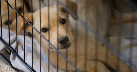 New York Passes Ban on Deceptive Pet Leasing Schemes