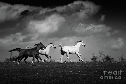 Wild Horses - Black And White by Dimitar Hristov