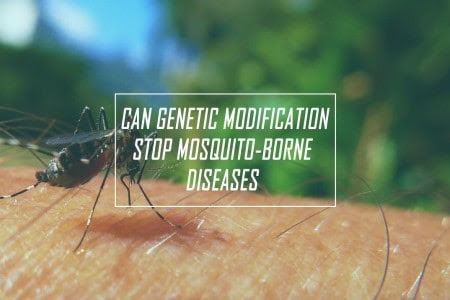 Genetically modified Mosquitoes to solve an ages old problem