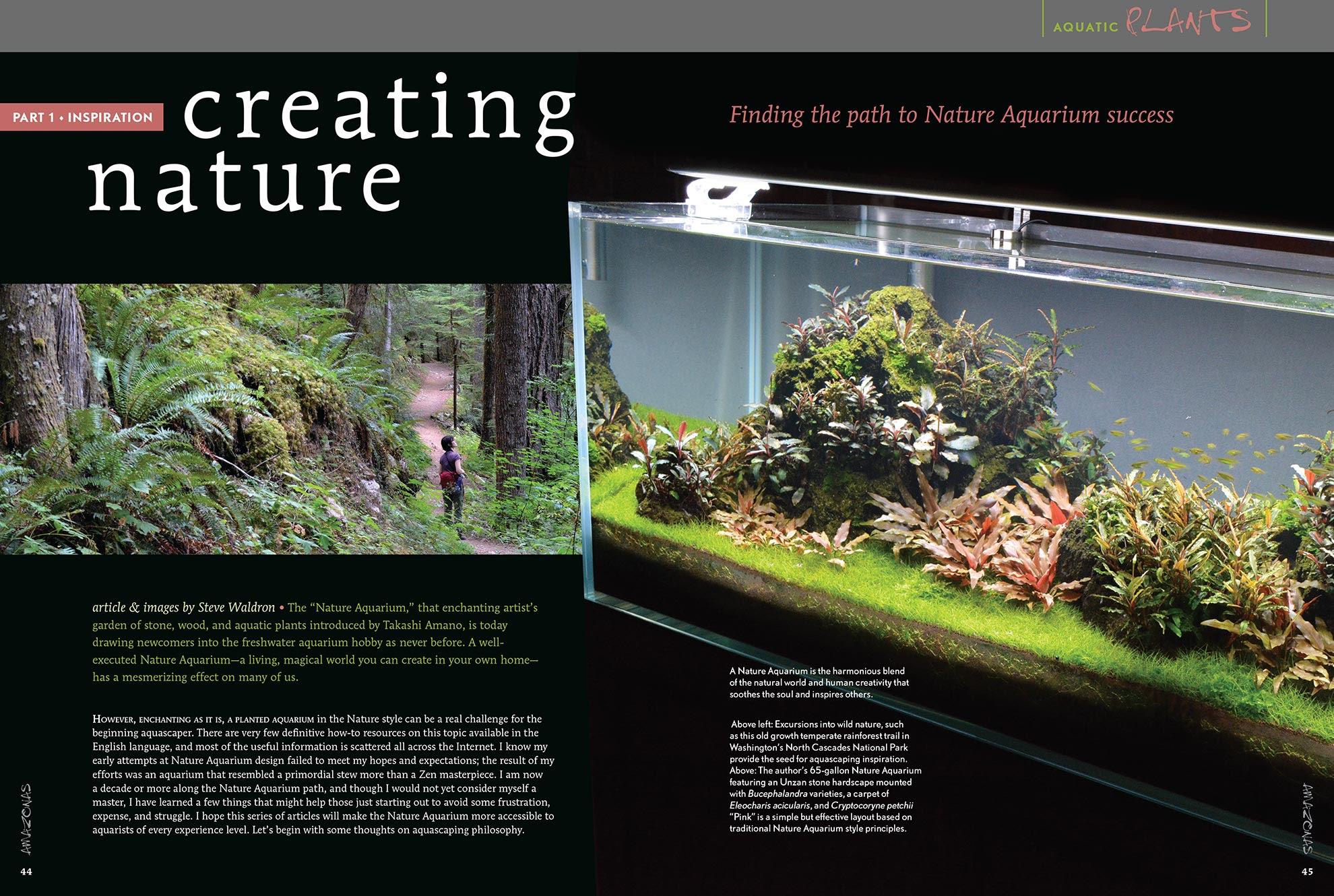 Aquascape Ideas Aquascaping Inspiration