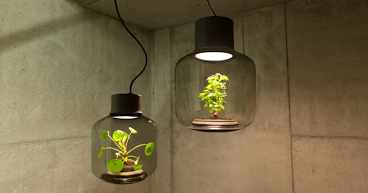 We Designed These Lamps To Grow Plants In Windowless Spaces