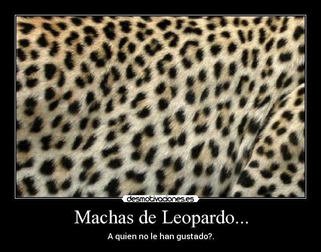 Machas De Leopardo Desmotivaciones