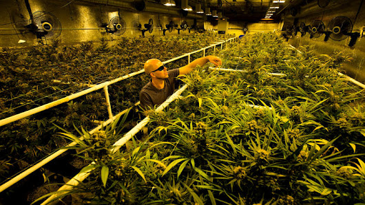 Today In Crowdfunding News: Crowdfunded financing for marijuana software business goes up in smoke, Belgian Brewery crowdfunds two-mile pipeline to transport beer, Pawraiser: a crowdfunding platform for injured animals, This is our only chance to save Swanage Pier, and more all brought to you by PICISI.com