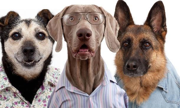 Resultado de imagem para cachorros estilosos