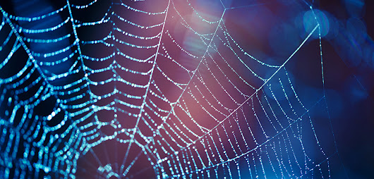 Army is Testing Genetically Engineered Spider Silk for Body Armor