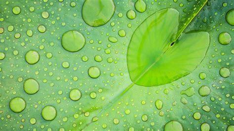 rain  leaves wallpaper hd page    wallpaperwiki