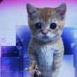 Father of lip-synching kittens: Miley Cyrus 'better off with singing cats than twerking' - NBC News.com