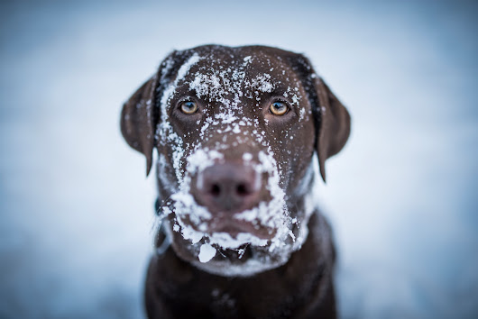 Some states are making it a serious crime to leave your pets out in the cold - The Washington Post
