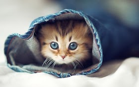 Kucing Oranye Lucu