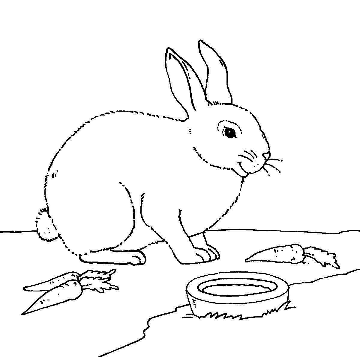bauernhof kaninchen