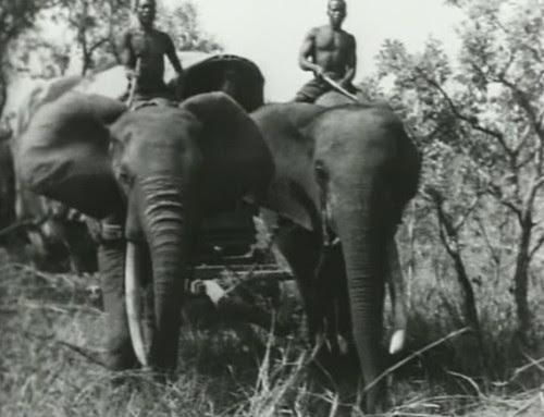Elephant%20Capture-2 by bucklesw1