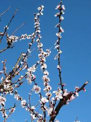 fiori, primavera, entusiasmo, Cose Belle