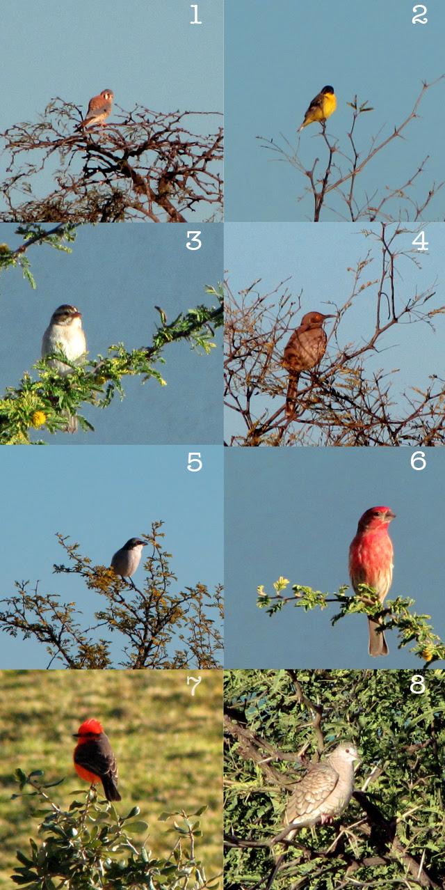 Birds I saw today