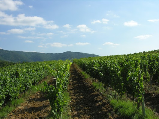 Limoux is More Than What Most People Think : Part 1