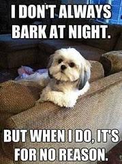 Dog barks for no reason