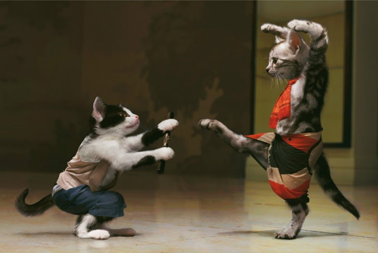 Resultado de imagem para gato disfarçado