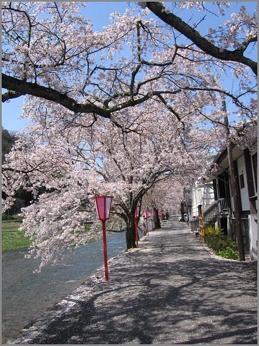 030 cherry blossom alley OK