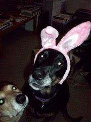 BunnyOuttakes_LolaSophie_411
