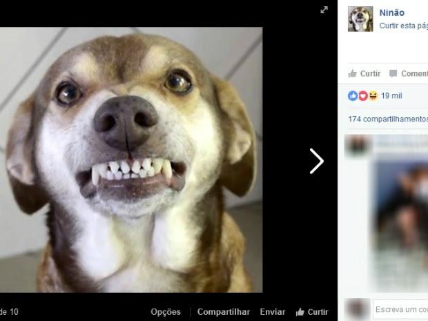 O vira-lata famoso nas redes sociais parecia estar sempre sorrindo nas fotos e vídeos (Foto: Reprodução/Facebook)