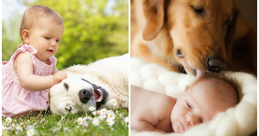 Studies Show That Infants And Dogs May Have The Same Social Intelligence; Does This Change The Way You Feel About Dogs?