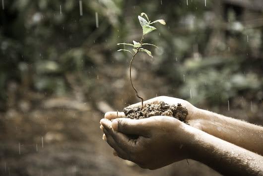 Life in dirt can be savior of human health