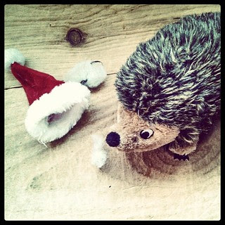Sophie loves her hedgehog, so Daddy got her a new one for her birthday...with a Santa hat. It lasted one night... #dogtoys