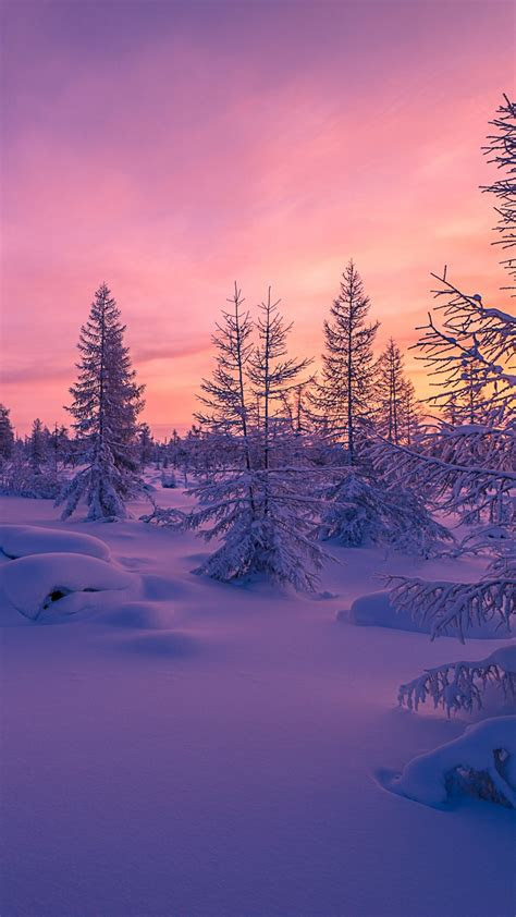 wallpaper winter forest snow scenery nature  wallpaper  iphone android mobile