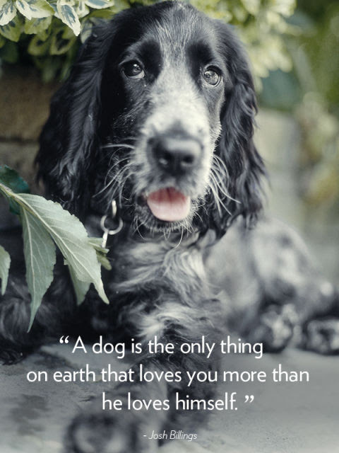 """A dog is the only thing on earth that loves you more than he loves himself."" -Josh Billings"