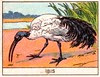 mart oiseaux120
