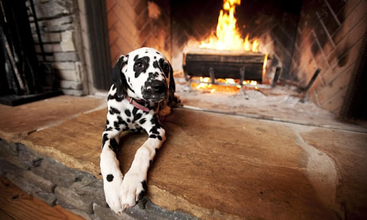Pup crawl: Britain's best dog-friendly pubs | Royal Canin puppies | The Guardian