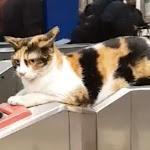 כל העולם מכיר את פתח תקווה בזכות החתולה הזאת - mako