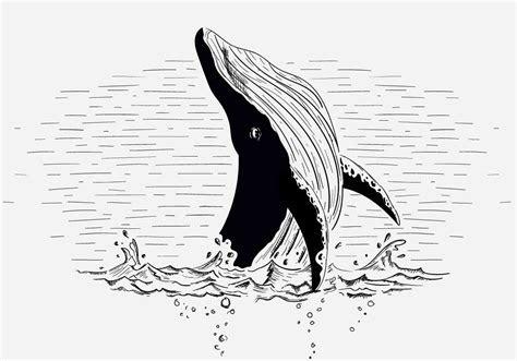 vector whale illustration   vector art