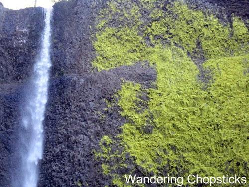 Day 4.8 Latourell Falls - Columbia River Gorge - Oregon 3