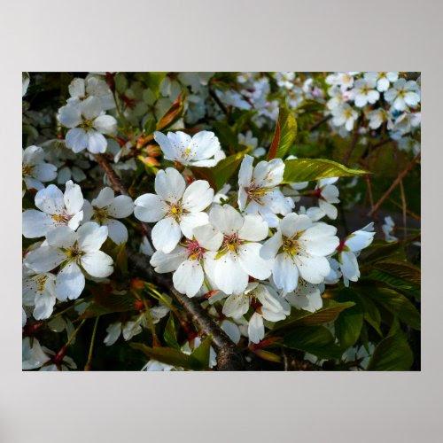 Cherry Blossom II print