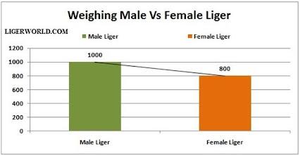 Hercules the liger 2014