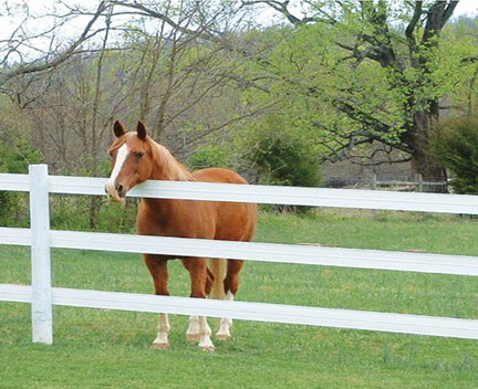Horse Fencing That is Safe, Strong, and Smart