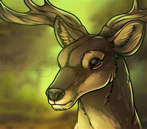 draw  deer head step  step forest animals