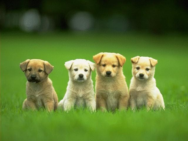 http://www.dogbreedersrus.com/Pictures/Dog_on_web.JPG