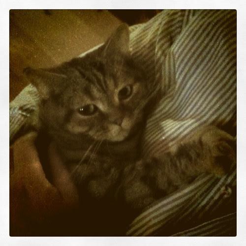 siri cuddle