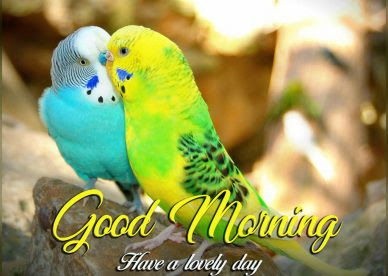 Love Birds Good Morning Images Quotes Wishes Messages