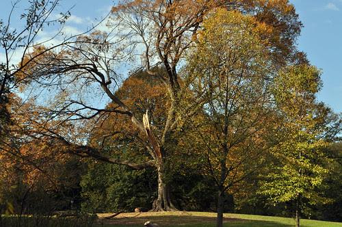 Favorite Tree Destruction