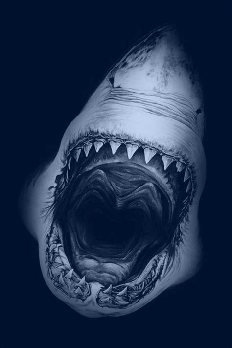 great white shark iphone  wallpaper