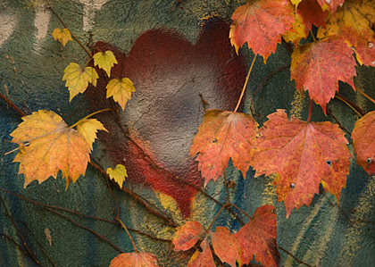 HeartbulbLeavesBlog