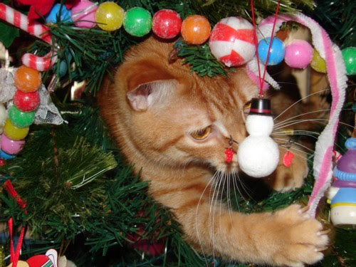 Christmas Cat Too